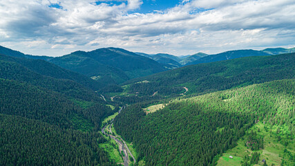Beautiful pine trees on the background of mountains. Carpathians