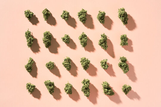 dried cannabis buds