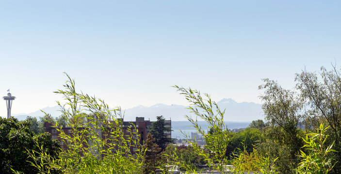 Panoramic view of the Olympic Mountain Range across from Seattle and partial view of a Seattle neighborhood with a lot of trees and Space Needle to the left.
