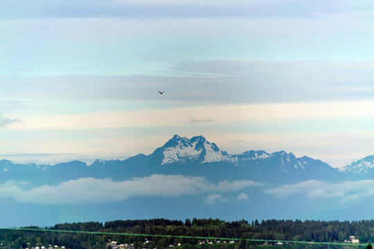 Panoramic view of the Olympic mountain range across from Seattle in early June; mountains are still covered in snow and a bird is flying high above.