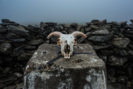 Ram's skull on mountain summit stone
