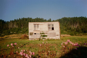 Abandoned House Against Redwood Forest
