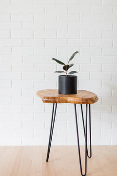 Rubber Tree on Live Edge Wooden Table with Iron Legs