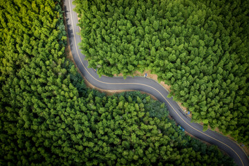 Aerial view of green summer bamboo forest with a road