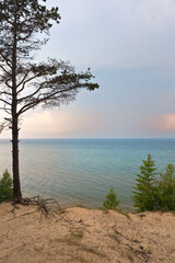 Baikal Lake. Coast of Olkhon Island on a foggy summer evening. Old pine tree with bare roots on the sandy shore at sunset. Beautiful lake landscape. Summer travel. Natural background