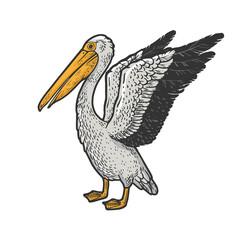 Pelican bird sketch raster illustration