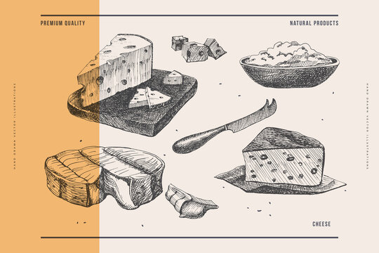 Hand-drawn hard and soft cheeses on a light background. Retro picture for the menu of restaurants, markets, and shops. Vector illustration in old engraving style.