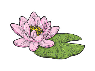 lotus Nelumbo water lily flower color sketch engraving vector illustration. T-shirt apparel print design. Scratch board imitation. Black and white hand drawn image.