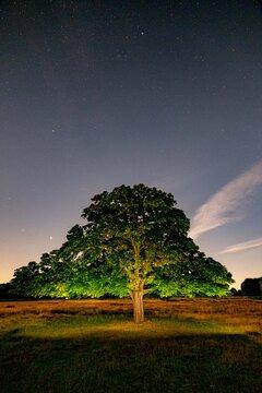 Richmond Park Night Sky