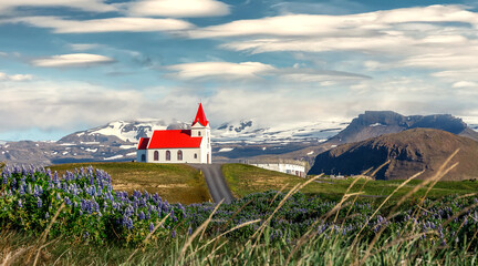 Panoramic view on tipical Icelandic Landscape with Incredible sky. Wonderful view on famous  Ingjaldsholl church and Blooming lupine flowers on foreground. Amazing nature of Iceland. wild area image.