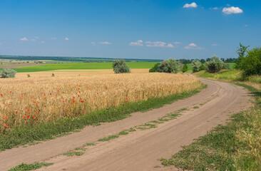 Summer landscape with an earth road beside ripe wheat fields near Dnipro city, Ukraine