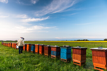 Beekeeper or Apiarist Working on Beehives Outdoor at Meadow