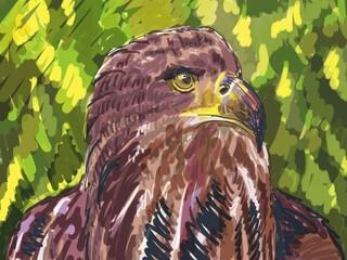 bird sketch drawing. digital painting