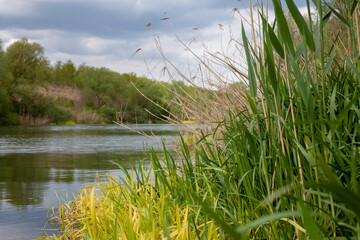 Grass reeds along the river bank with cloudy blue sky