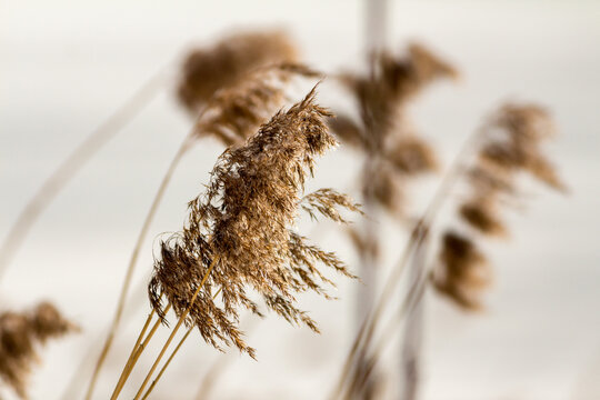 View of reeds against white background