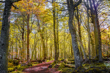 Hiking trail at magical austral Magellanic subpolar forests in Tierra del Fuego National Park, near Ushuaia and Beagle Channel, Patagonia, Argentina