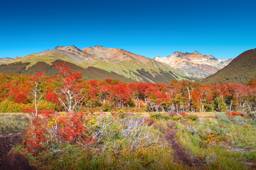 Panoramic view over magical austral forest, peatbogs dead trees, glacial streams and high mountains in Tierra del Fuego National Park, Patagonia, Argentina