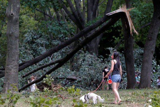 A woman looks at downed trees as she walks her dog in the aftermath of Tropical Storm Isaias in Astoria Park in Queens, New York