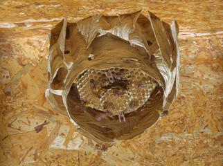 Hornet Nest Hive