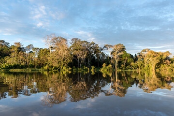 The Amazon rainforest of Peru at Parcaya Samiria Iquitos
