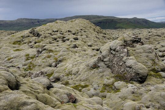 Woolly fringe moss covering Eldhraun lava field, Laki Area, Skaftafell National Park, Iceland