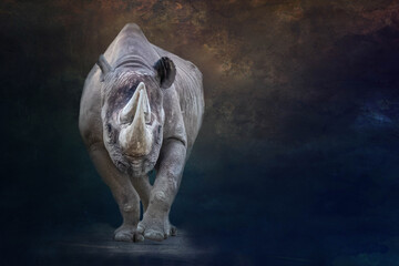 portrait of a large standing rhino