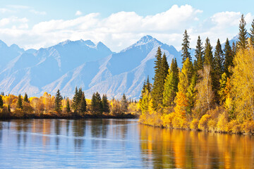 Autumn landscape with beautiful yellowed trees on the banks of calm river and a mountain range at sunny day. Siberia, Baikal region, Eastern Sayan, Buryatia, Tunka foothill valley, Irkut river
