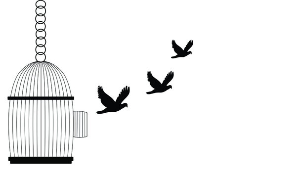 Bird Flying Out of Cage,Freedom Concept,stop cruelty to animals let animals be free in nature.