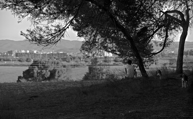 Man sitting on his back looking at a meadow with the city in the background and with dogs running around him