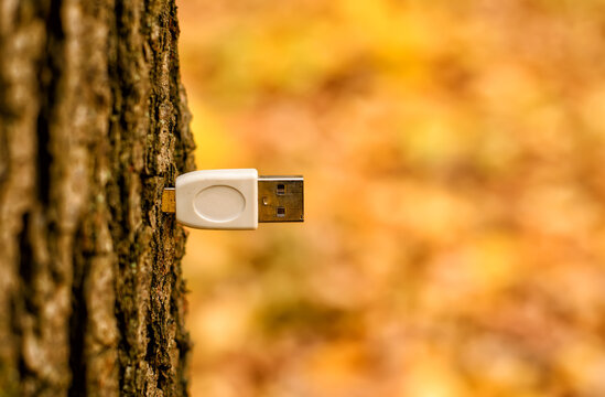 Adapter USB Standard-A, male plug, for USB inputs or outputs, integrated in a tree trunk, yellow and brown autumn leaves background, limited depth of field