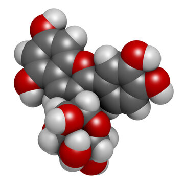 Chrysanthemin plant pigment molecule. 3D rendering. Atoms are represented as spheres with conventional color coding: hydrogen (white), carbon (grey), oxygen (red).