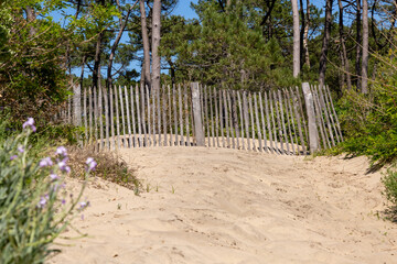 Barrier erosion fences and sea grass preserving sand dunes