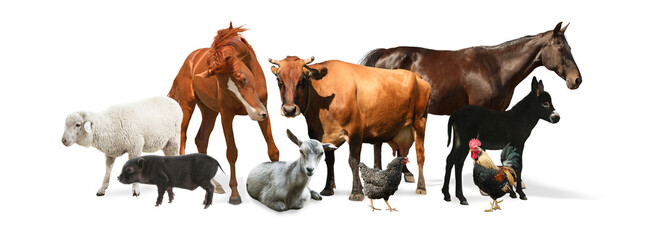 Collage with horse and other pets on white background. Banner design