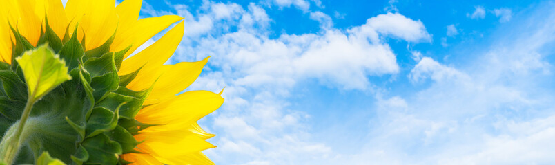 Photo sur Plexiglas Tournesol Sonnenblume im Gegenlicht vor blau-weißem Himmel