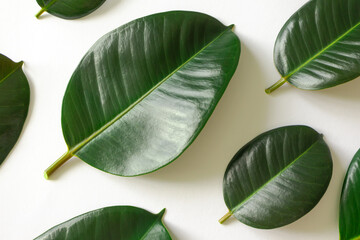 Pattern tropical leaves on white background. Nature flat lay backdrop. Organic, eco, natural, bio...