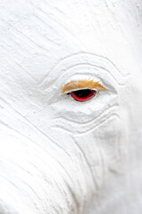 Foto op Canvas Historisch mon. Closeup of elephant statue eye
