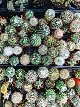 Succulents on display at a florist