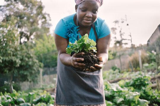 Picking fresh produce