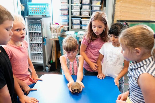 Students in Classroom with Tortoise