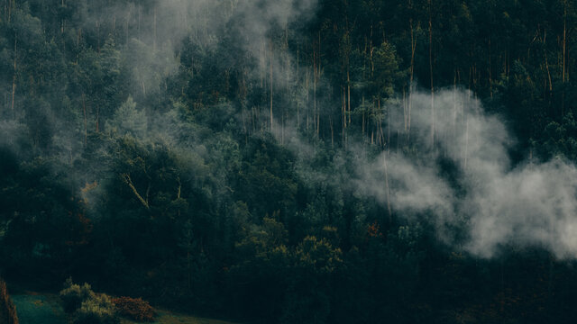 smoke blowing through thick trees