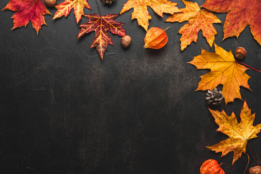Autumn composition made of fall leaves, flowers, nuts, pine cones on black background. Flat lay, top view