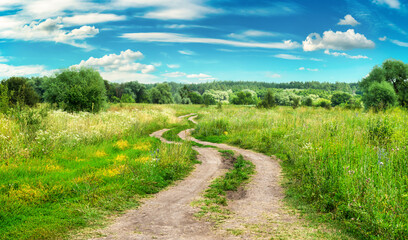 Country road in field