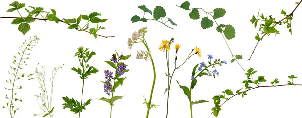 Fototapeta Many stems of various meadow grass with yellow, white and purple flowers and tree branches with young leaves on white background