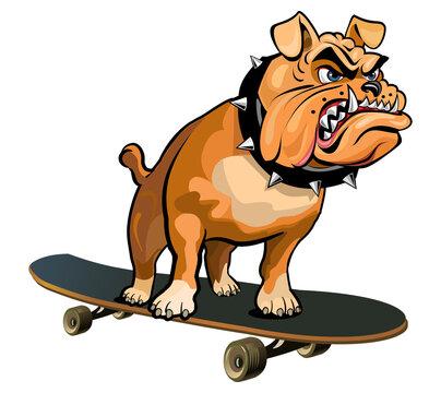 Bulldog On A Skate Board