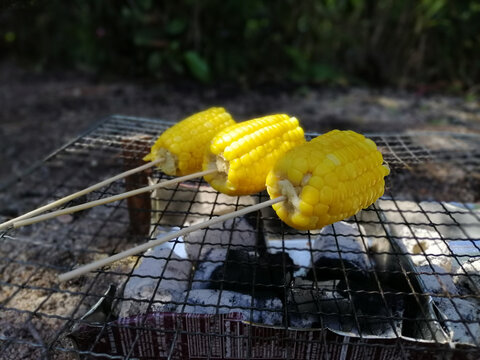 Outdoor camp fire and cooking