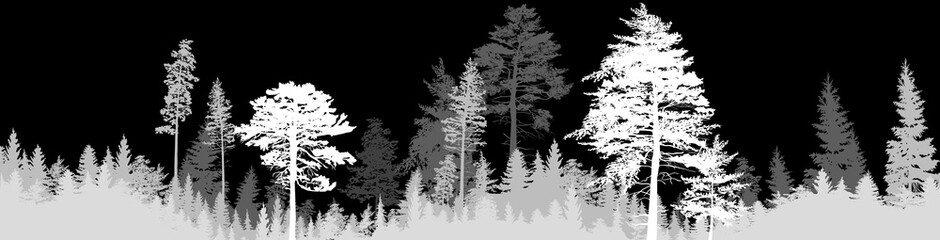 dark grey fir forest stripe isolated on black