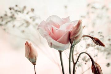 Fototapeta Pastelowe róże obraz