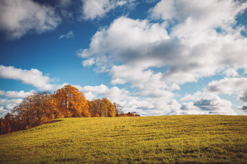 Wall Mural - trees on the field in autumn on beautiful sunny day