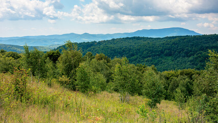 primeval beech forest in mountains. mountain landscape in summer. grass on the meadow. mountain antalovetska polyana in the distance. beauty of transcarpathian nature