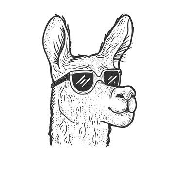 llama in sunglasses sketch raster illustration